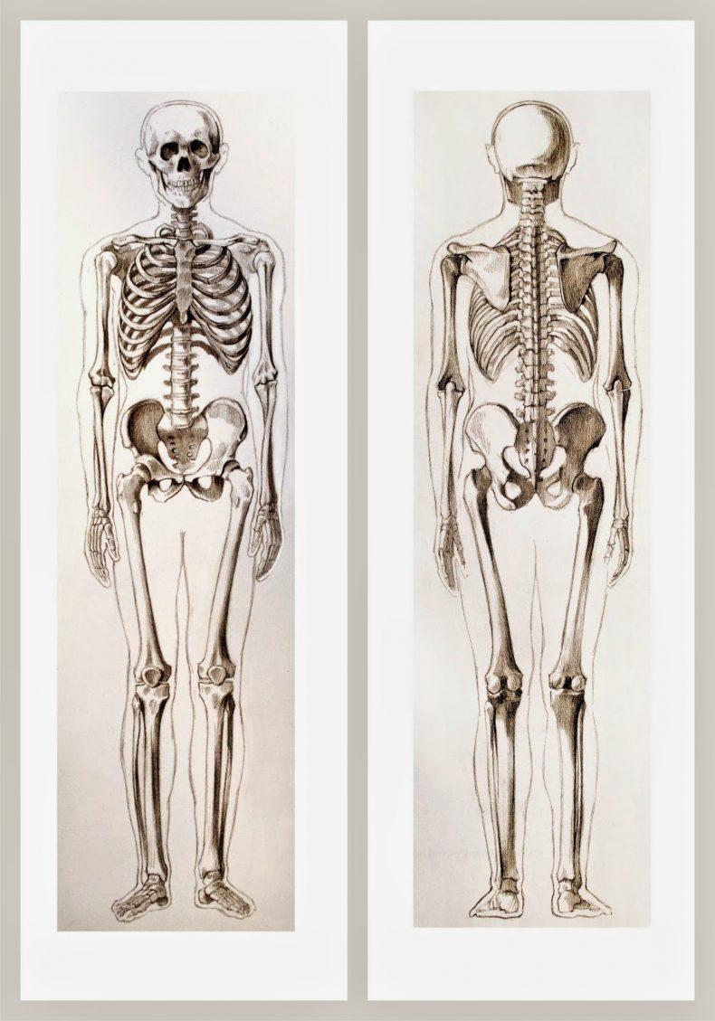 lamina-2-con-esqueletos